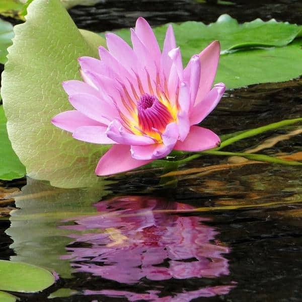 Un tissu en tige de lotus pour vos vêtements