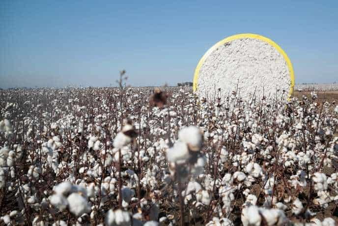 Des alternatives au coton conventionnel ?