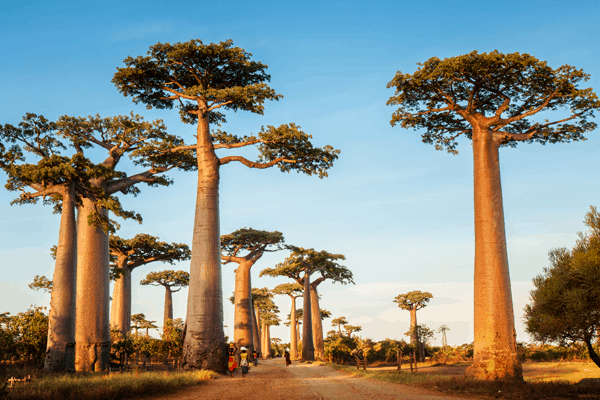 Des filets de pêche en fibre de baobab